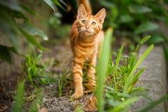 Nettes inländisches Kätzchen, das oben schaut Lizenzfreies Stockfoto