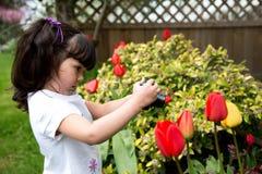 Nettes junges Mädchen, das Foto von Frühlings-Tulpen macht Lizenzfreies Stockfoto