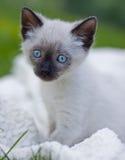 Nettes Kätzchen Lizenzfreie Stockfotos