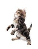 Nettes Kätzchen Stockbild