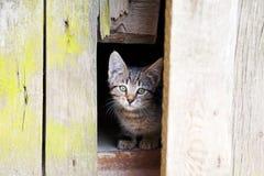 Nettes Kätzchen Stockfotos