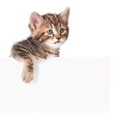 Nettes Kätzchen Lizenzfreies Stockbild