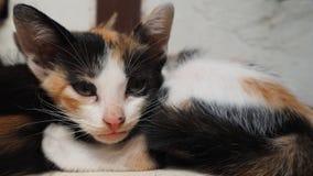 Nettes Kätzchen Stockfoto