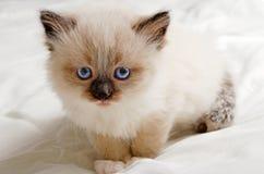Nettes Kätzchen Stockbilder