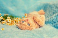 Nettes Kätzchen auf blauer Decke Stockbilder