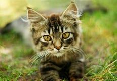 Nettes Kätzchen auf dem Gras Lizenzfreies Stockfoto