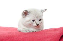 Nettes Kätzchen auf roter Decke Stockfotos