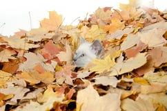 Nettes Kätzchen, das in den Blättern sich versteckt Stockbilder