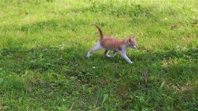 Nettes Kätzchen, das im Garten spielt stock footage