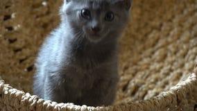 Nettes Kätzchen, das im Raum stillsteht stock footage