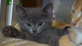 Nettes Kätzchen, das im Raum stillsteht stock video