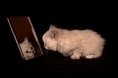 Nettes Kätzchen, das im Spiegel schaut Lizenzfreies Stockbild