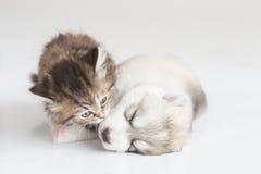 Nettes Kätzchen, das Welpen küsst Stockfotografie