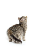 Nettes Kätzchen der getigerten Katze Lizenzfreies Stockfoto