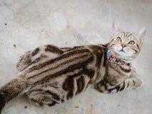 Nettes Kätzchen der getigerten Katze Lizenzfreie Stockfotos