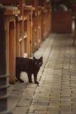 Nettes Kätzchen der getigerten Katze, das durch einen Bretterzaun späht Stockbilder