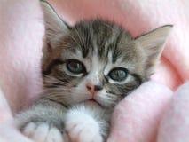 Nettes Kätzchen der getigerten Katze, die Kamera betrachtend lizenzfreie stockfotos