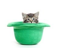 Nettes Kätzchen der getigerten Katze im grünen Hut Stockbilder