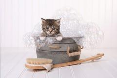 Nettes Kätzchen in der Waschschüssel, die durch Schaumbad gepflegt erhält Lizenzfreie Stockbilder