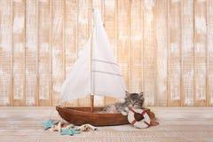 Nettes Kätzchen in einem Segelboot mit Ozean-Thema Stockbilder