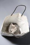 Nettes Kätzchen in einer Einkaufstasche Stockbild