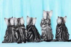 Nettes Kätzchen fünf von der Rückseite Stockfotografie
