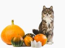 Nettes Kätzchen, gelber Kürbis und zwei Kerzen stockfotos