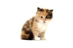 Nettes Kätzchen getrennt auf Weiß stockfotografie