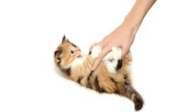 Nettes Kätzchen getrennt auf Weiß stockbild