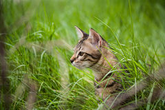 Nettes Kätzchen im Gras Stockbild