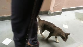 Nettes Kätzchen im Haus stock video footage