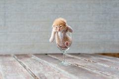Nettes Kätzchen im Wein-Glas mit strukturiertem Hintergrund Stockbild