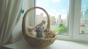 Nettes Kätzchen mit Mutterkatze stock footage