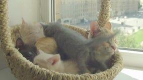 Nettes Kätzchen mit Mutterkatze stock video footage