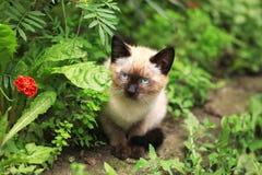 Nettes Kätzchen nahe bei Blume Stockbilder