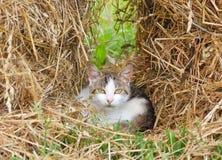 Nettes Kätzchen sitzt im Heu Stockbild