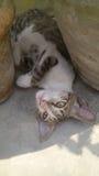 Nettes Kätzchen um Blumentopf lizenzfreies stockfoto