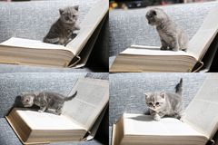 Nettes Kätzchen und Bücher, multicam, Schirm des Gitters 2x2 Lizenzfreies Stockbild