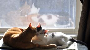 Nettes Kätzchen und Katze Lizenzfreie Stockbilder