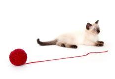Nettes Kätzchen und rotes Garn Stockfotografie