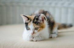 Nettes Kätzchenanstarren lizenzfreie stockfotos