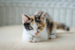 Nettes Kätzchenanstarren stockbild