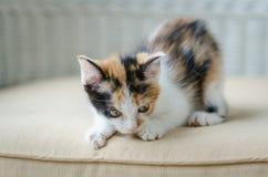 Nettes Kätzchenanstarren stockfotos