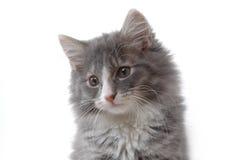 Nettes Kätzchengesicht lizenzfreies stockfoto