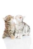 Nettes Kätzchenküssen Stockbild