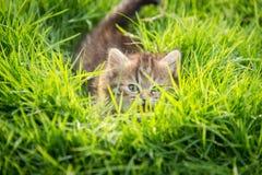 Nettes Kätzchenverstecken der getigerten Katze Stockfotografie