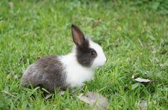 Nettes Kaninchen, das auf dem grünen Gras sitzt Stockfotografie