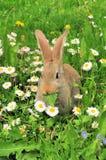 Nettes Kaninchen, das Blatt am Sommer isst lizenzfreie stockbilder