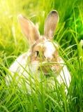 Nettes Kaninchen im Gras Stockbild
