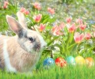 Nettes Kaninchen im Gras mit Tulpen Lizenzfreies Stockbild